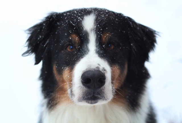 caleb snow 1.25.14